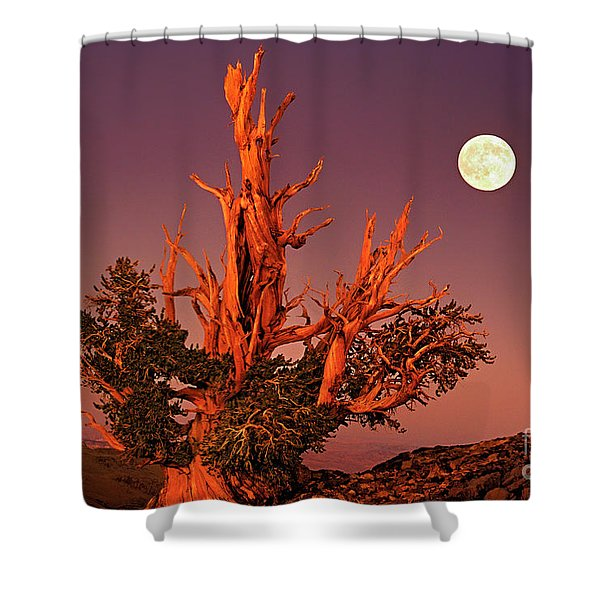Full Moon Behind Ancient Bristlecone Pine White Mountains California Shower Curtain