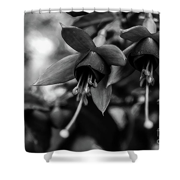 Fuchsia, Black And White Shower Curtain