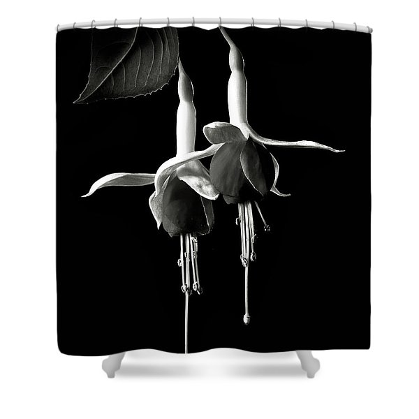 Fuschias In Black And White Shower Curtain