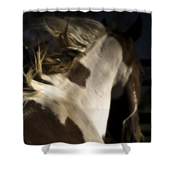 Shower Curtain featuring the photograph Galisteo 1 by Catherine Sobredo