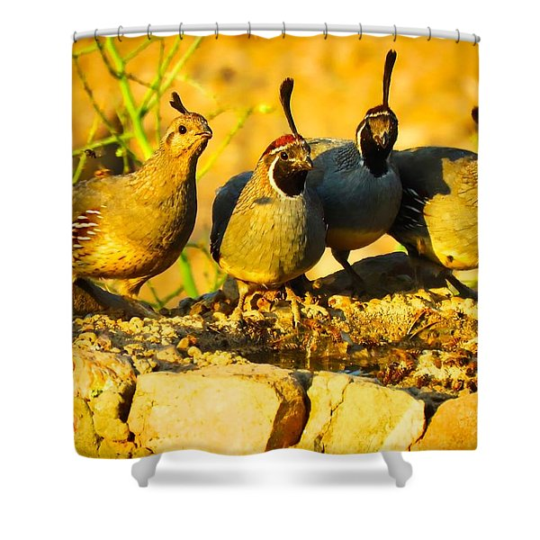 Gambel's Quail Foursome Shower Curtain