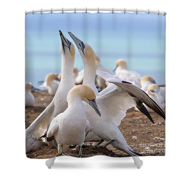 Gannets Shower Curtain