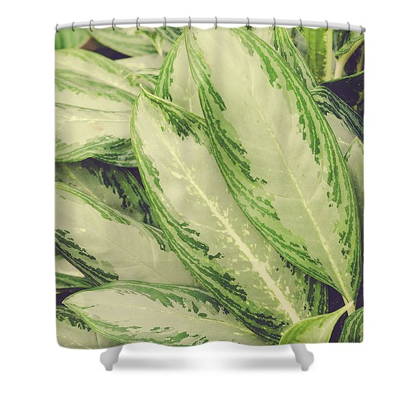 Gathering Shower Curtain