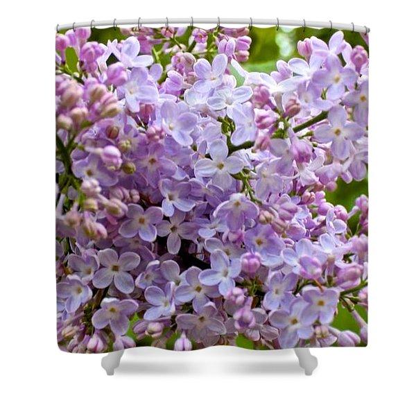 Gentle Purples Shower Curtain