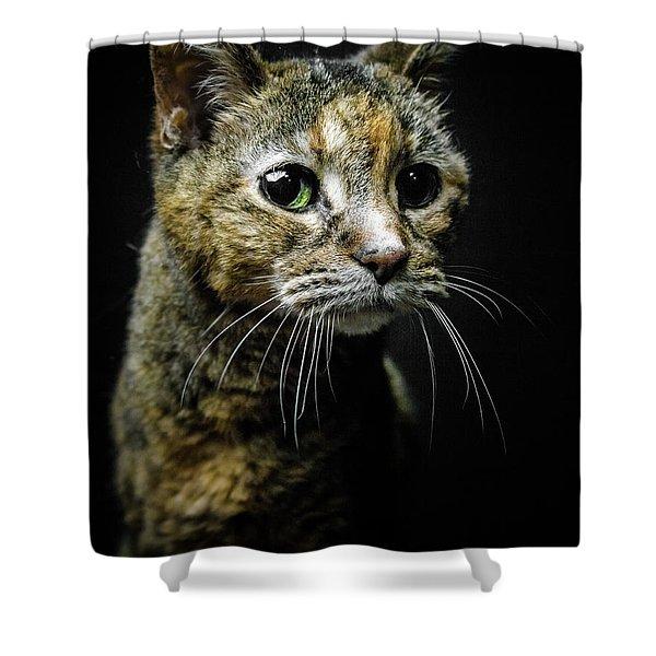 Geraldine Shower Curtain