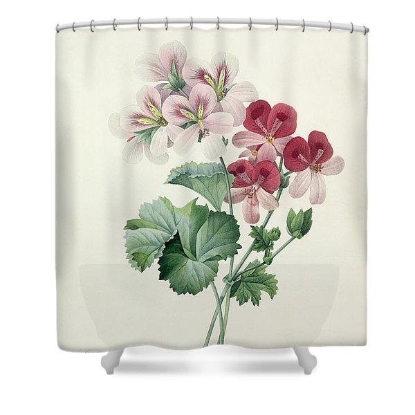 Geranium Variety Shower Curtain