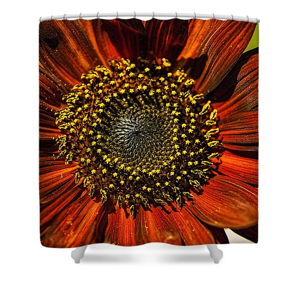 Gerber Daisy Full On Shower Curtain