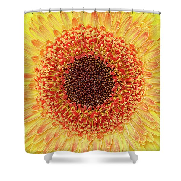 Gerber Daisy Shower Curtain