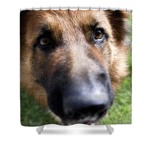 Shower Curtain featuring the photograph German Shepherd Dog by Fabrizio Troiani