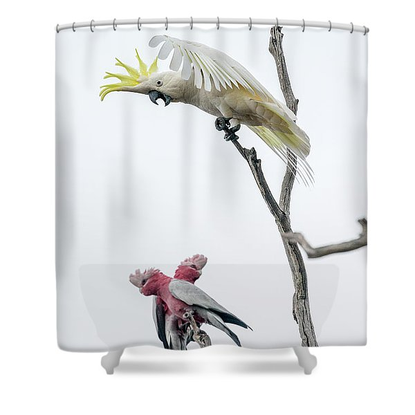 Get Off My Perch Shower Curtain