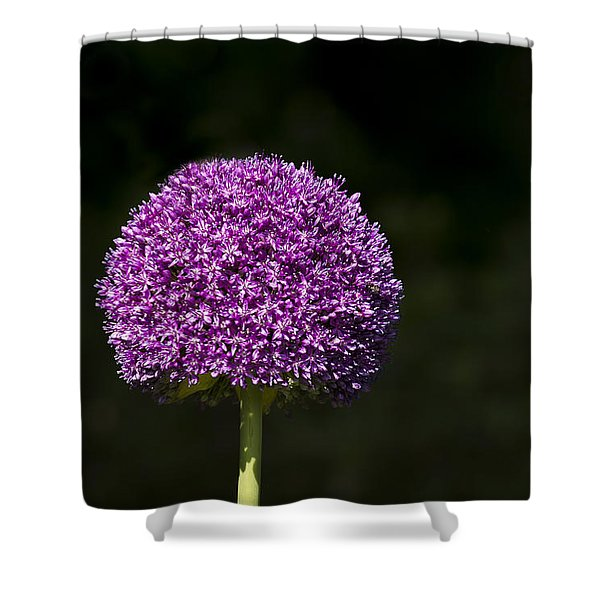 Shower Curtain featuring the photograph Giant Allium 2 by Andrea Silies