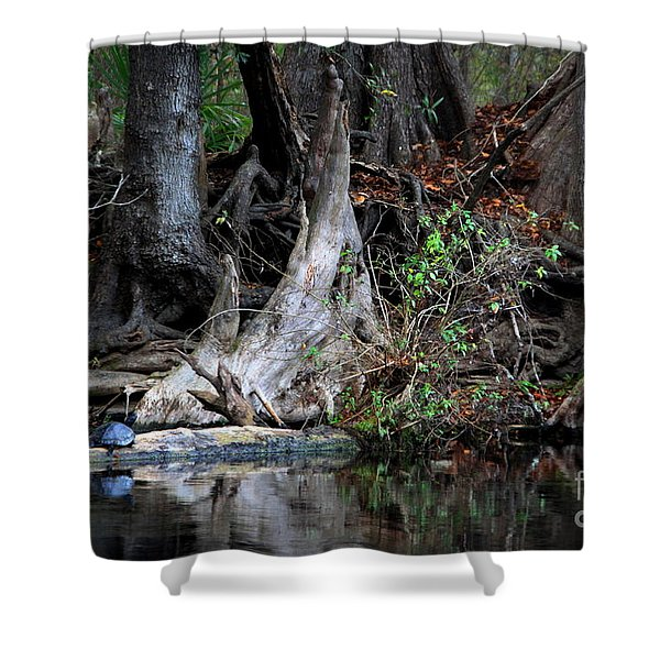 Giant Cypress Knees Shower Curtain