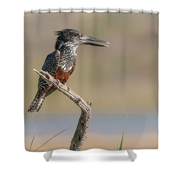 Giant Kingfisher Shower Curtain