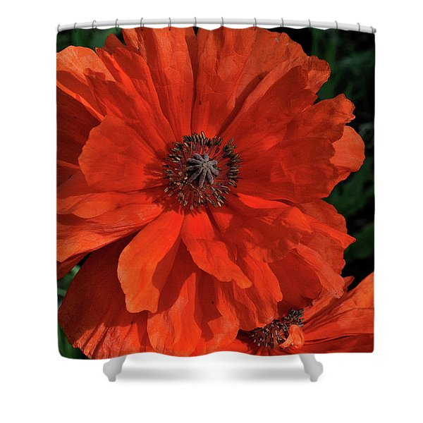 Giant Mountain Poppy Shower Curtain