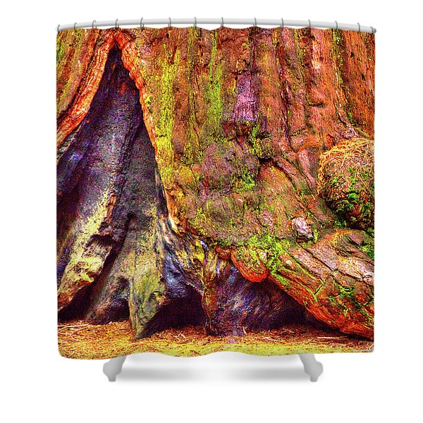 Giant Sequoia Base With Fire Scar Shower Curtain