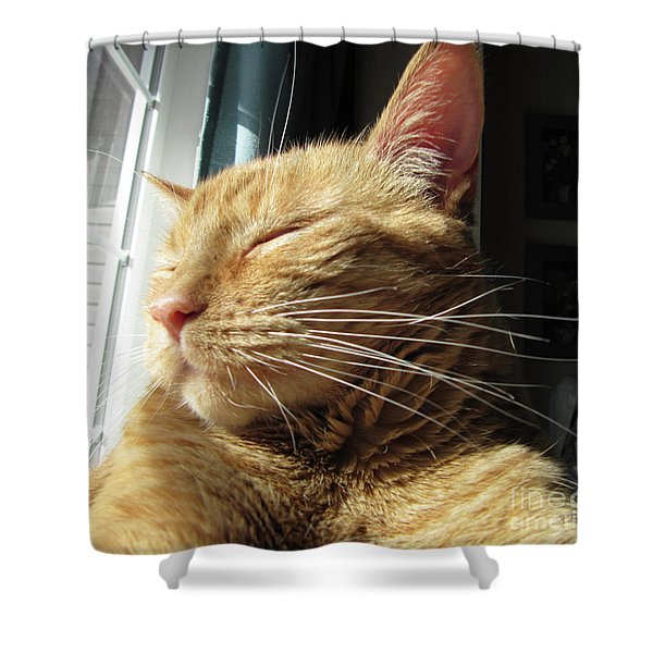Ginger Tabby Shower Curtain