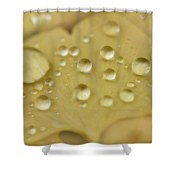 Ginkgo Balls Shower Curtain