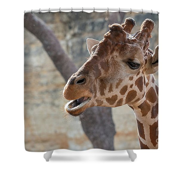 Girafe Head About To Grab Food Shower Curtain