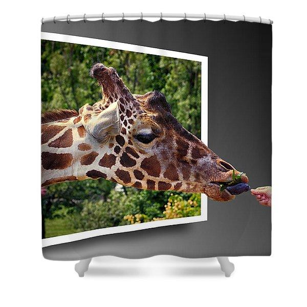 Giraffe Feeding Out Of Frame Shower Curtain