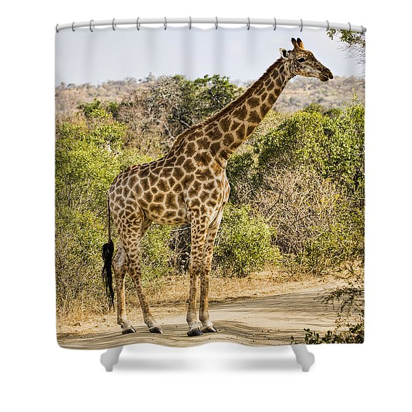 Giraffe Grazing Shower Curtain