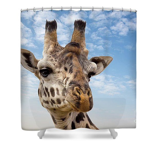 Giraffe In The Masai Mara Shower Curtain