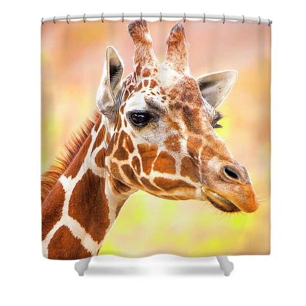 Shower Curtain featuring the photograph Giraffe, Animal Decor, Nursery Decor,  by David Millenheft