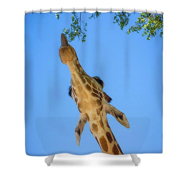 Giraffe Lunch Shower Curtain