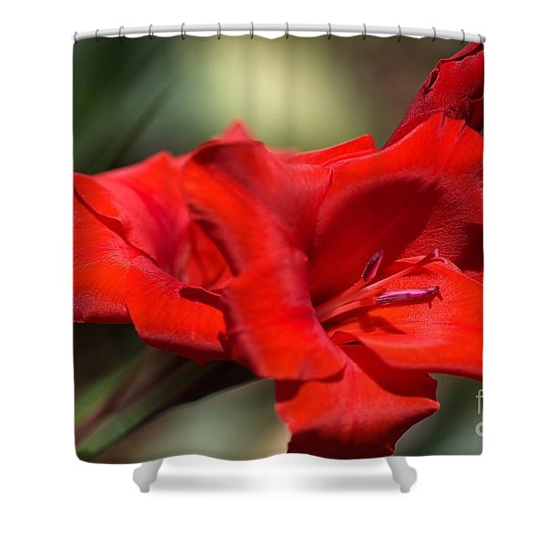 Gladioli Manhattan Variety  Shower Curtain