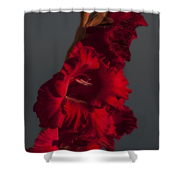 Gladiolus Against A Dark Cloud Shower Curtain