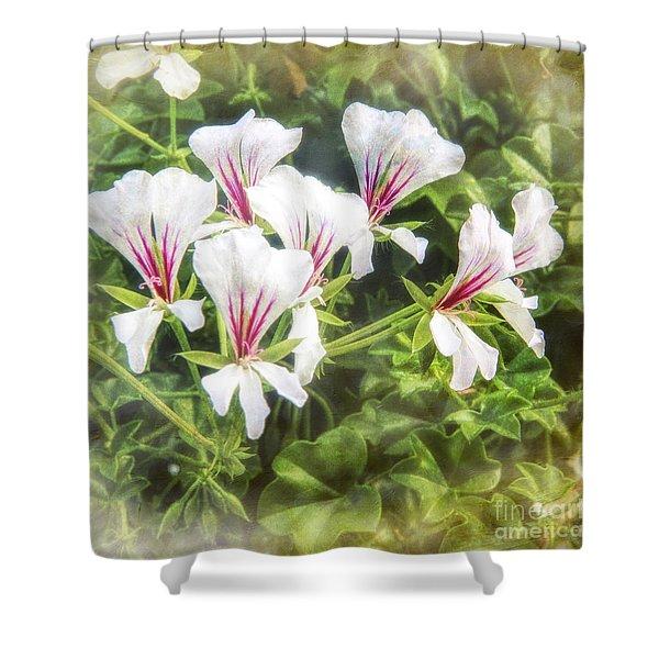 Gladiolus Callianthus Shower Curtain