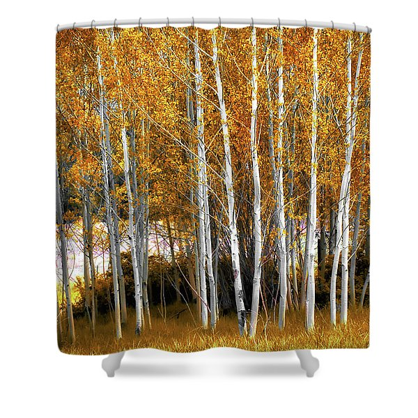 Gleaming Fall Aspens Shower Curtain