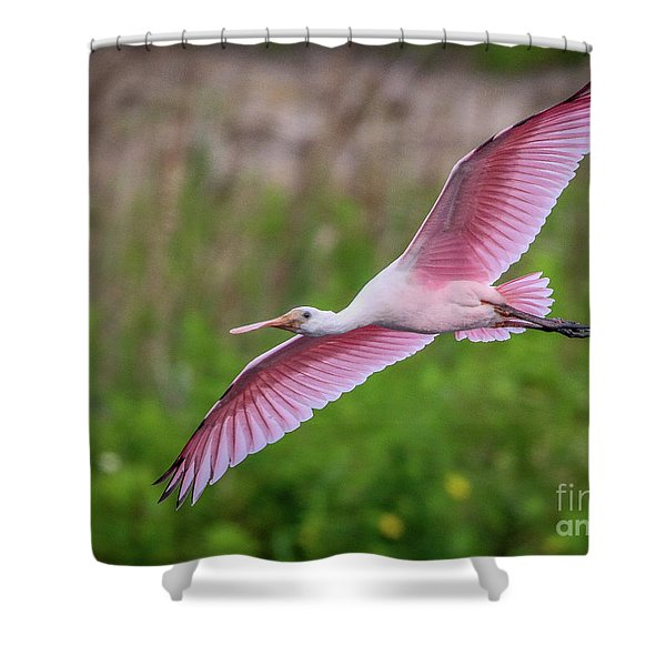 Shower Curtain featuring the photograph Gliding Spoonbill by Tom Claud