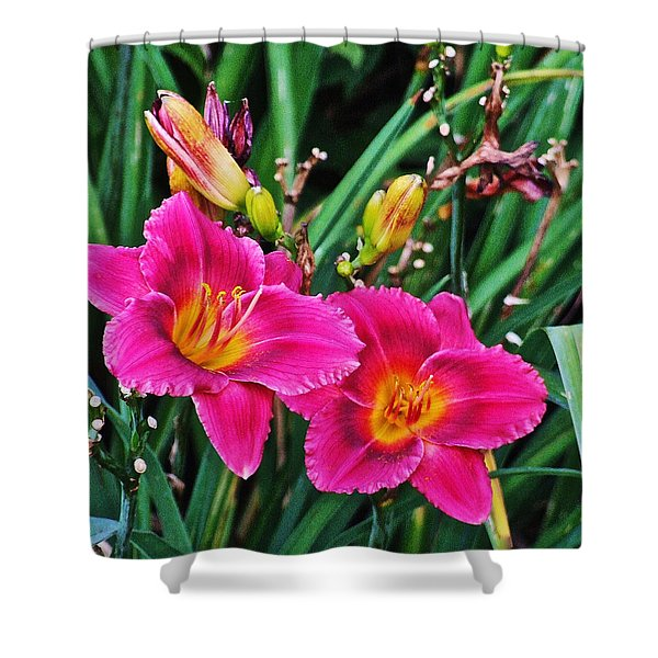 Glorious Daylilies Shower Curtain