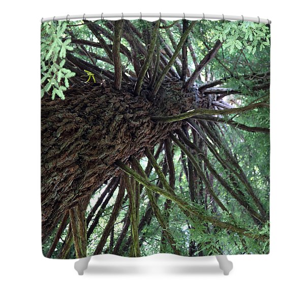 Glorious Tree  Shower Curtain