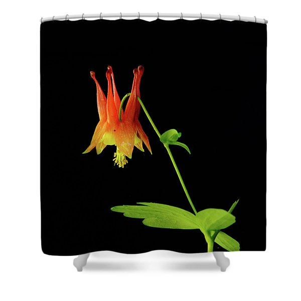 Glowing Colombine Shower Curtain