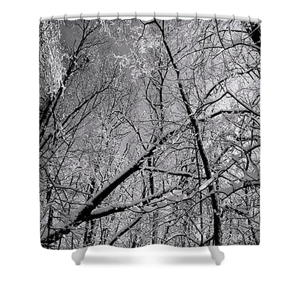 Glowing Forest, Knoch Knolls Park, Naperville Il Shower Curtain