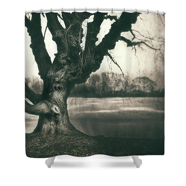 Gnarled Old Tree Shower Curtain