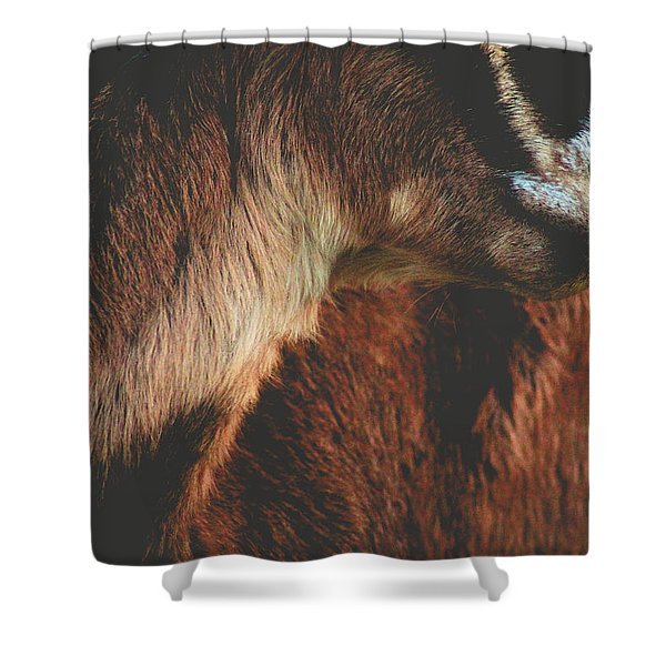 Goat Love Shower Curtain