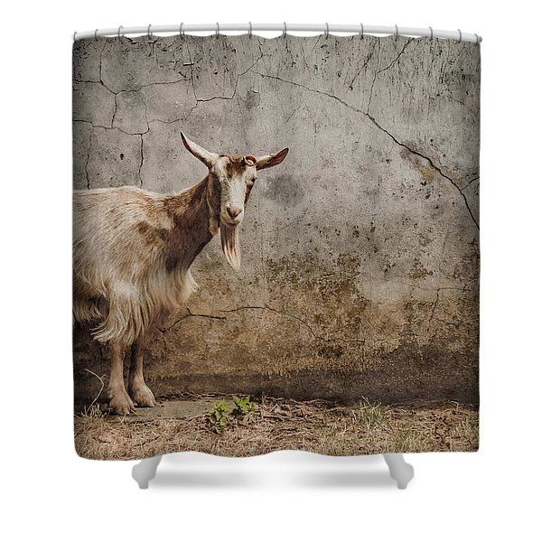 London, England - Goat Shower Curtain