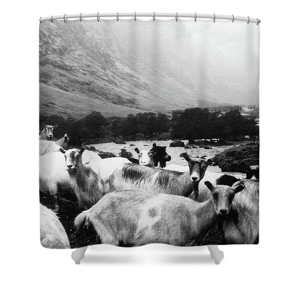 Goats In Norway- By Linda Woods Shower Curtain