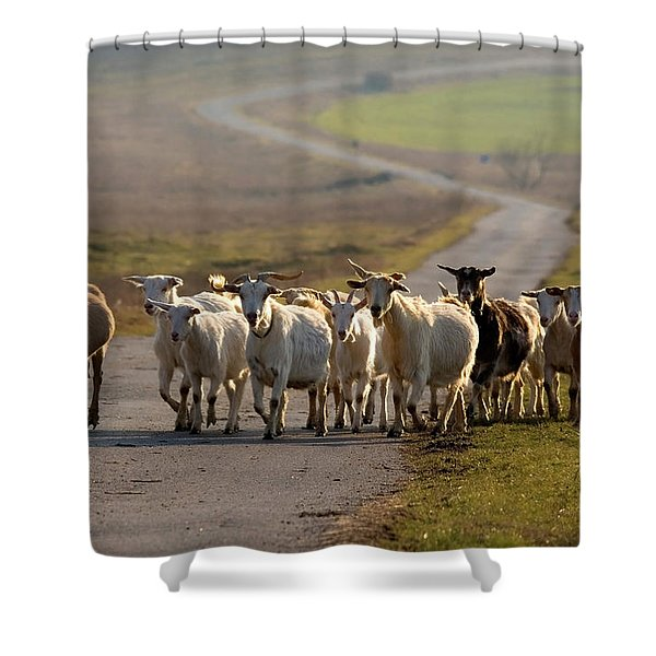 Goats Walking Home Shower Curtain