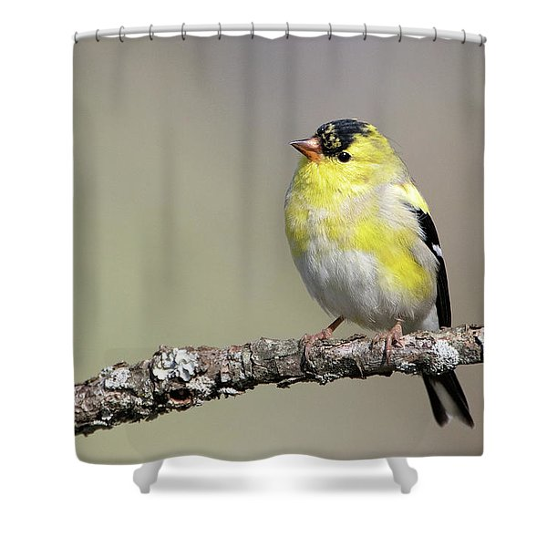 Gold Finch Shower Curtain