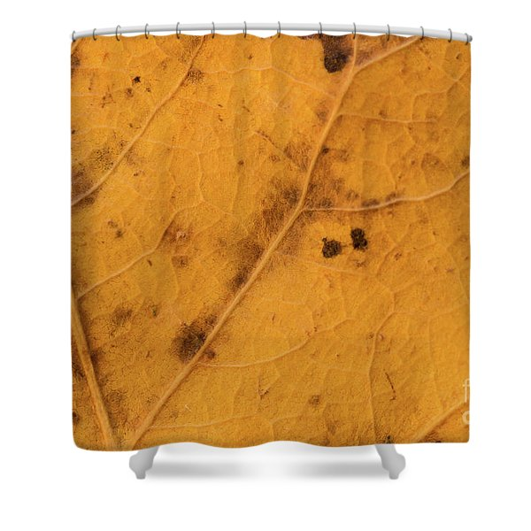 Gold Leaf Detail Shower Curtain