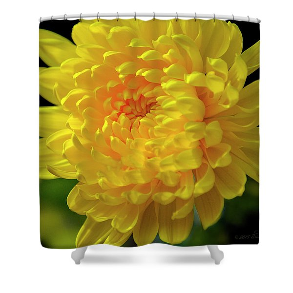 Golden Chrysanthemum  Shower Curtain