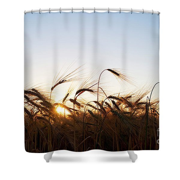 Golden Crop Shower Curtain