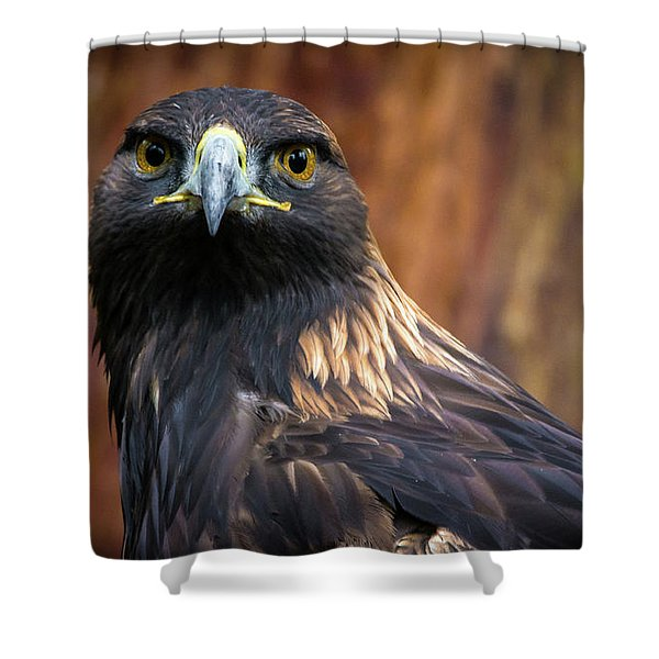 Golden Eagle 1 Shower Curtain