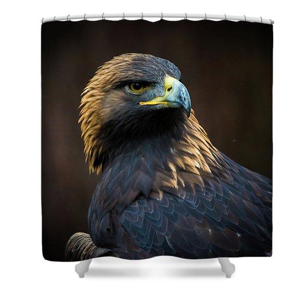 Golden Eagle 3 Shower Curtain