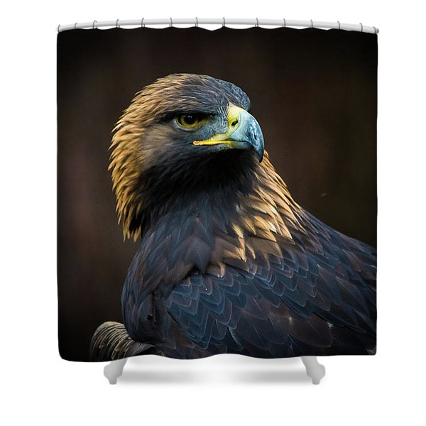Golden Eagle 3 Shower Curtain