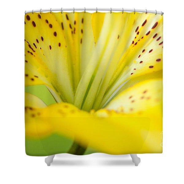 Golden Grace Shower Curtain