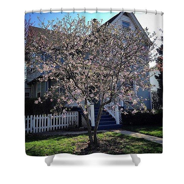Golden Hour Magnolia   Shower Curtain